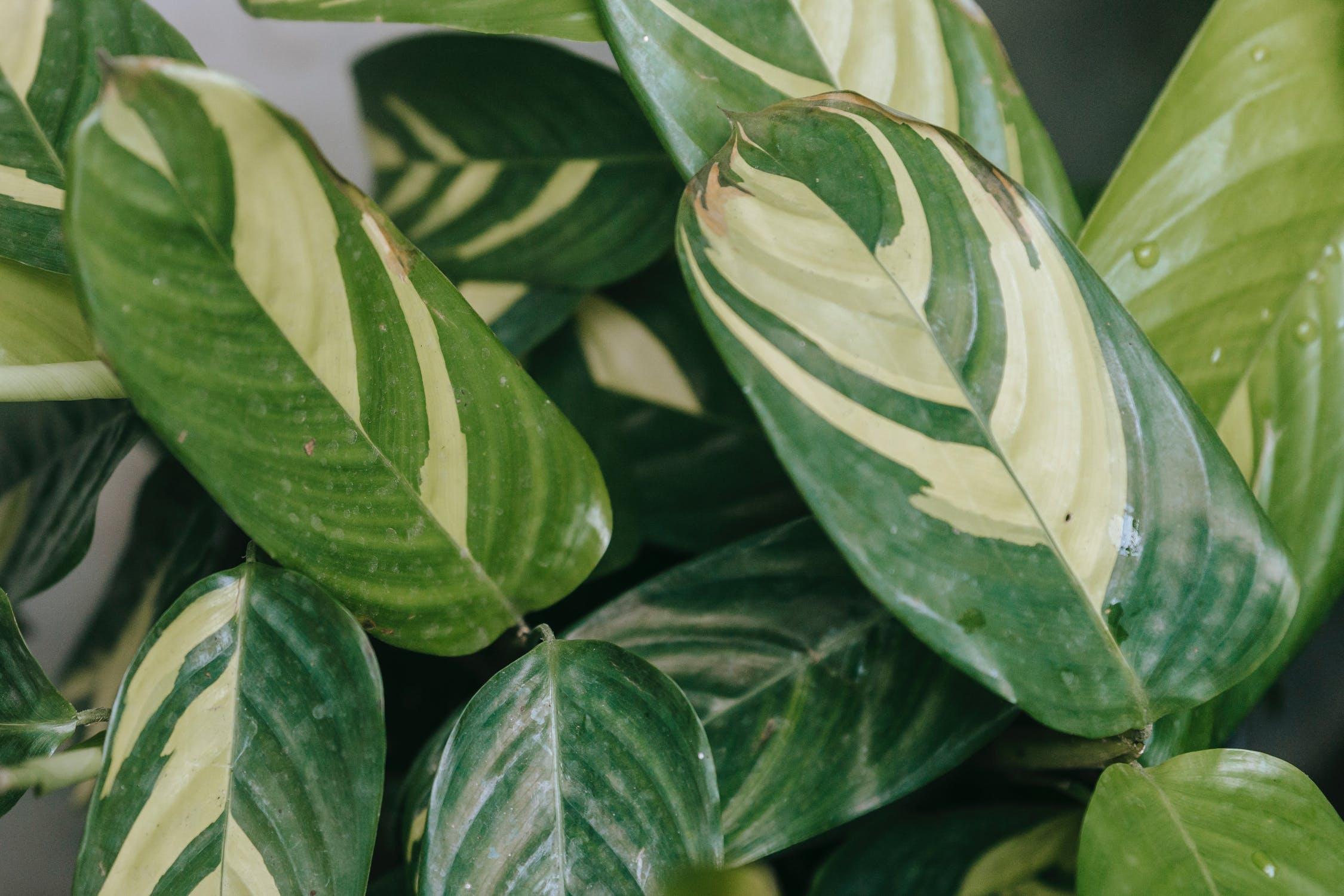 quelles plantes pour faire un mur vegetal interieur