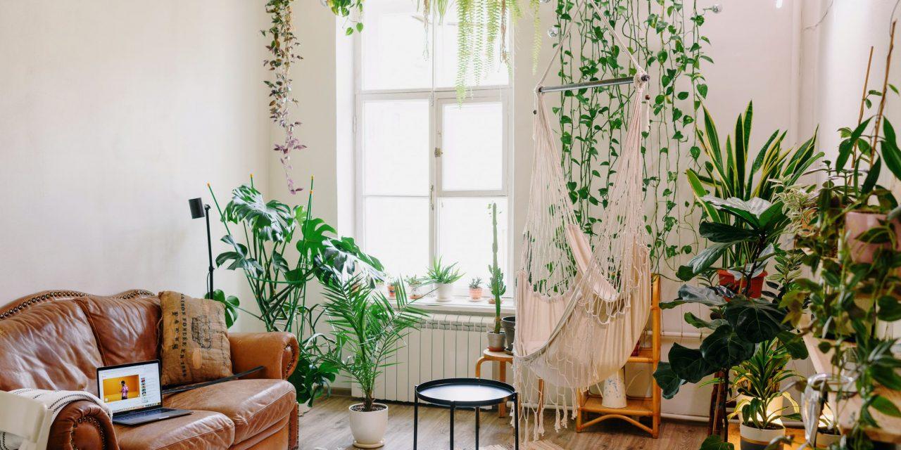 Comment s'y prendre pour faire un mur végétal intérieur ?